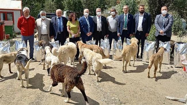 CHP, Sokak Hayvanlarının Sorunlarını Gündeme Getirdi