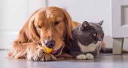 Bayram öncesinde kedi köpek otellerine büyük ilgi