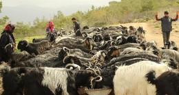 Tüm et ve süt ürünleri aynı değil: İklim krizi ve hayvancılık